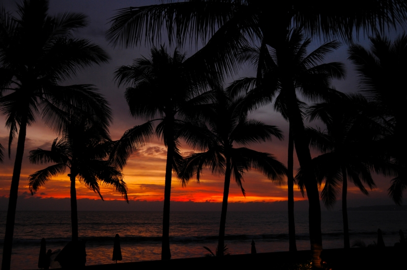 Palm Trees Silhouetts