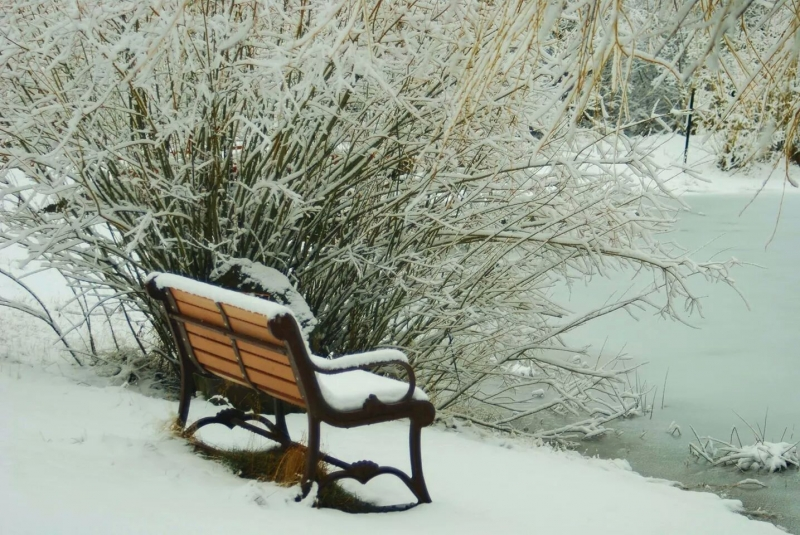 Peaceful Winters Pond