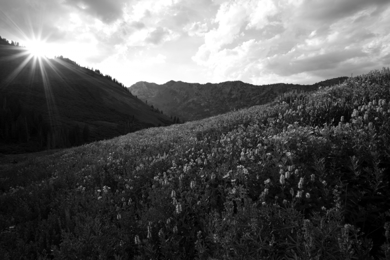 Summer In The Wasatch