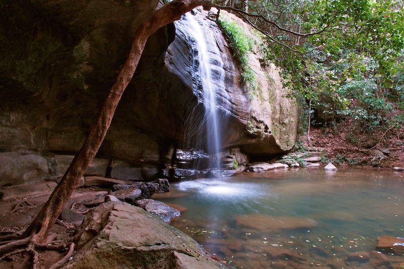 Buderim State Forest