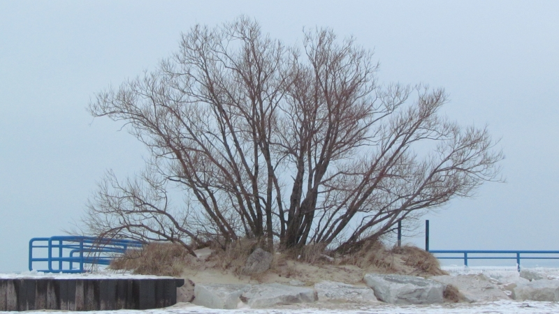 Lonesome Tree By The Pier
