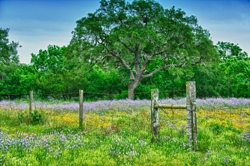 Ranch Wildflowers