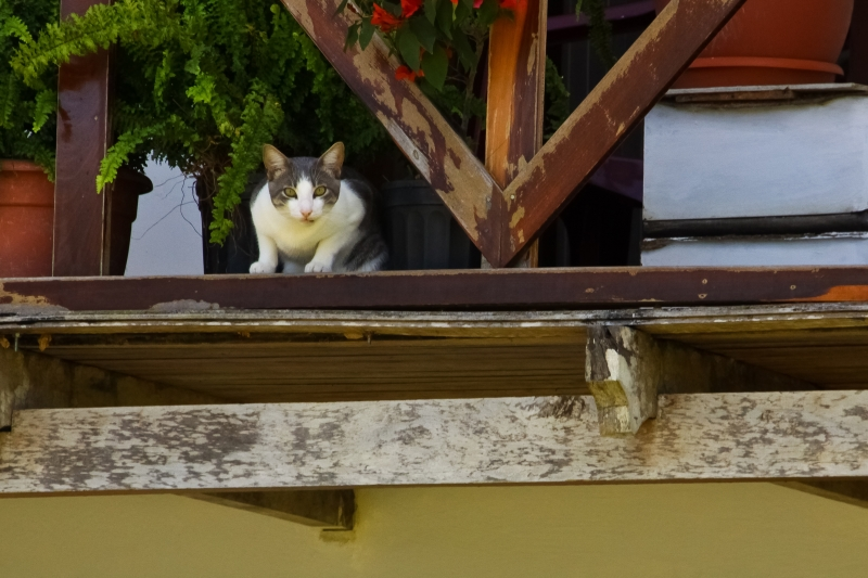 Cat On Balcony