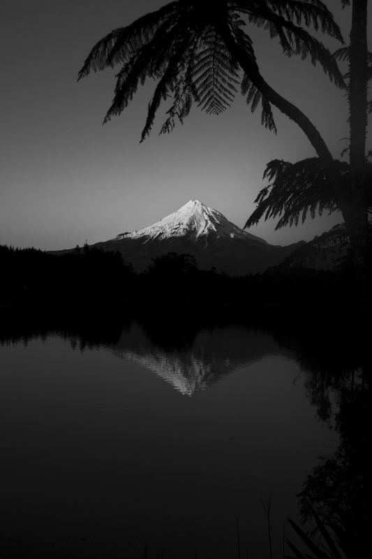 Mt. Taranaki Black And White With Ferns