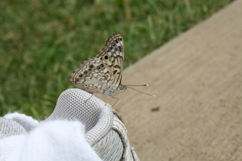 Butterfly On A Shoe