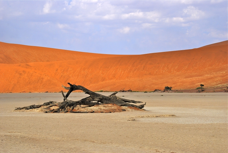 The Namib Desert Trees