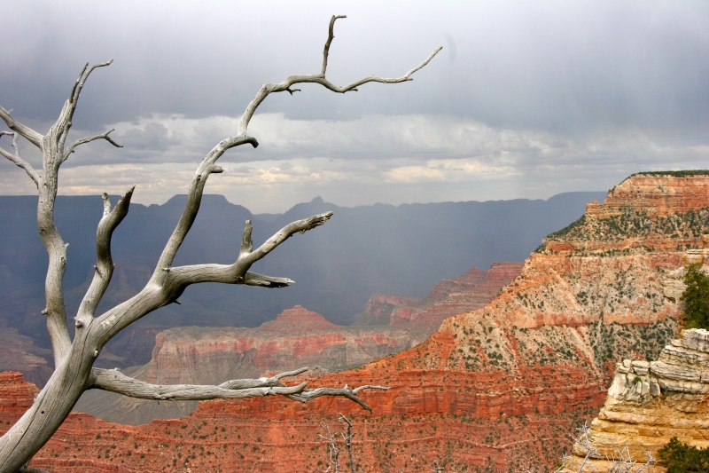Gray Skies Over Grand Canyon