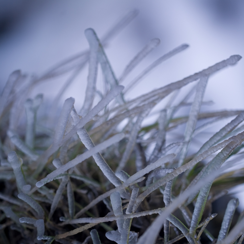 Frozen 'grass'