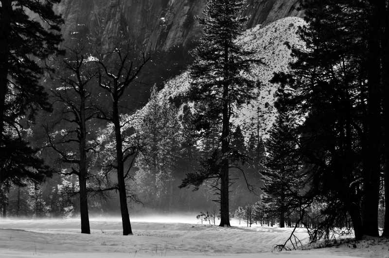 Yosemite Meadow In Evening Light