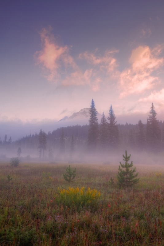 Secret Misty Morning Meadow