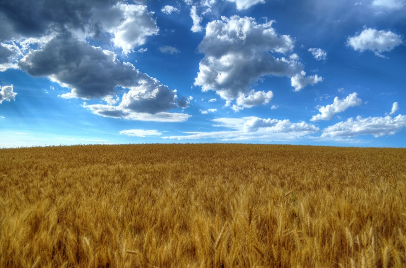 Clouds Over Idaho Grain Fields