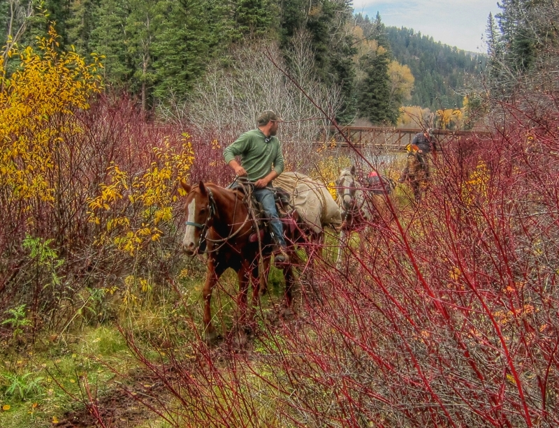 Horse Packing In The Rockies