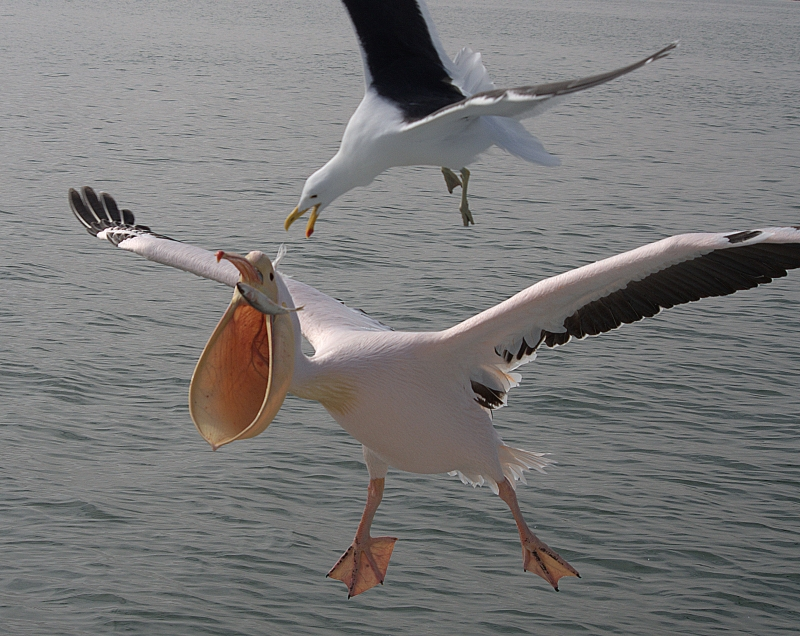 Flying Birds And Fish