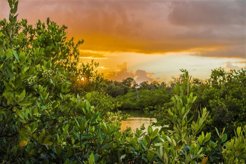 Ozello, Fl Sunset Through The Mangroves