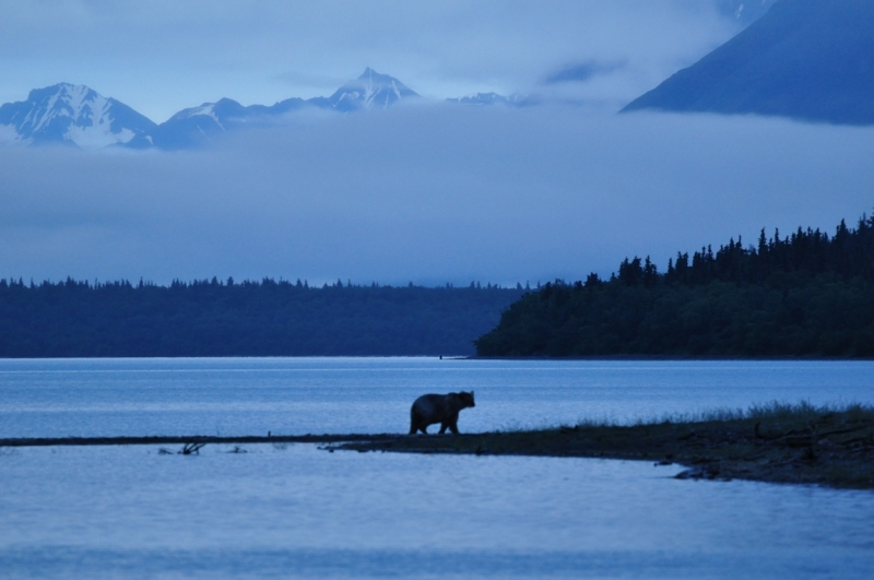 Early Morning In Katmai