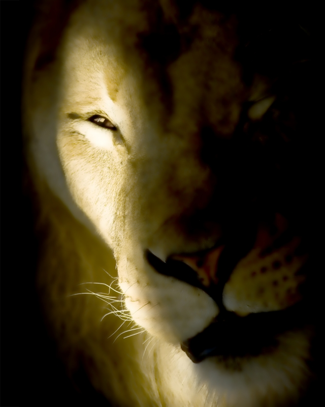 Ray Of Light On Lion Face