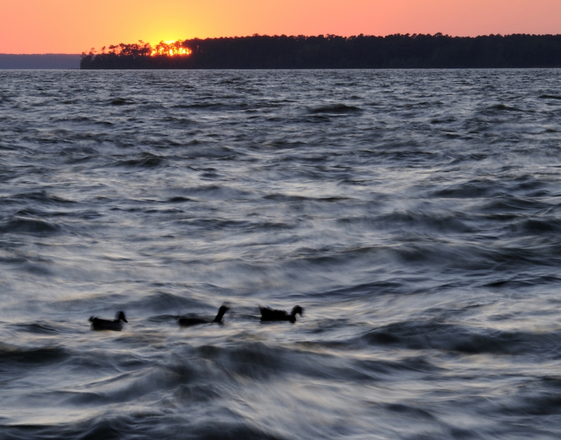Sunset Over Lake With Ducks