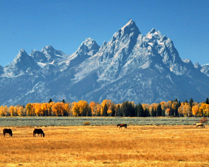 Horses Browse Tetons Ii