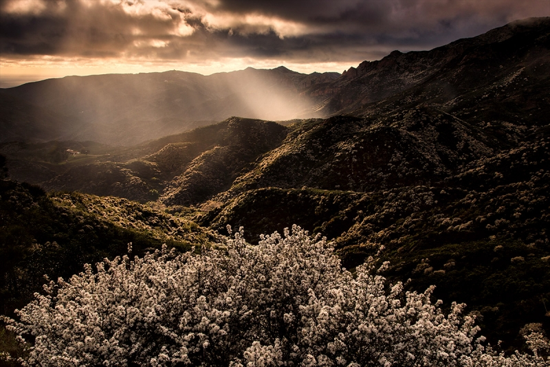 Little Sycamore Canyon, Santa Monica Mountains