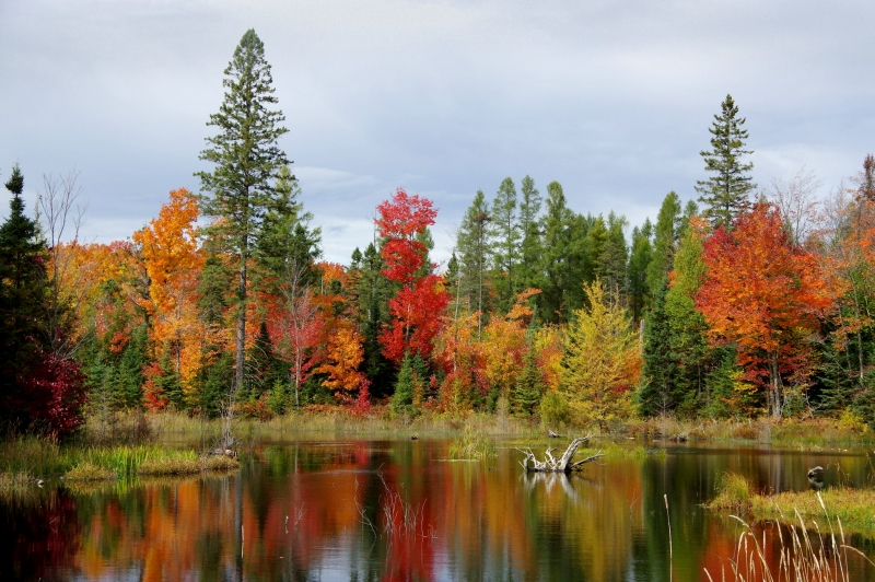 Fall Color On A Small Pond