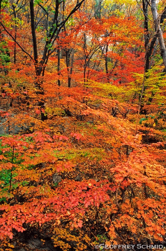 Bukhaensan Maple Forest
