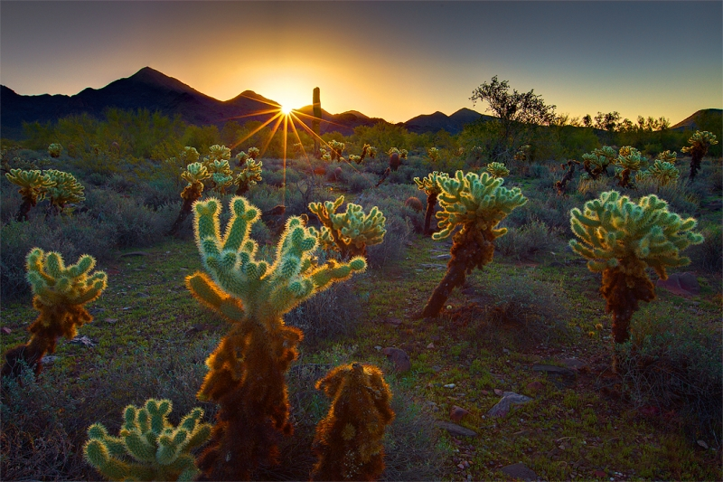 Mcdowell Mountain Sunrise