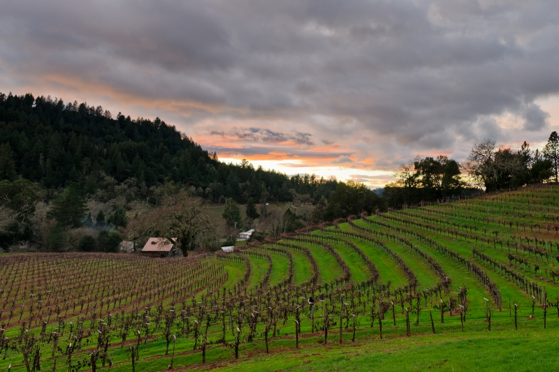 Sonoma Vineyard Winter Sunset