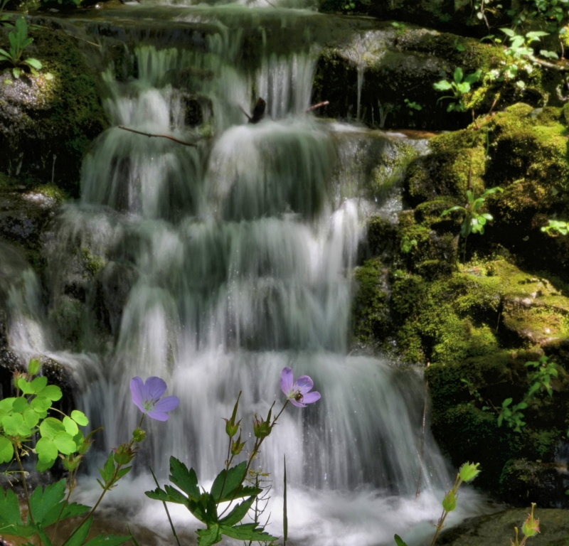Wild Geranium And Water Fall