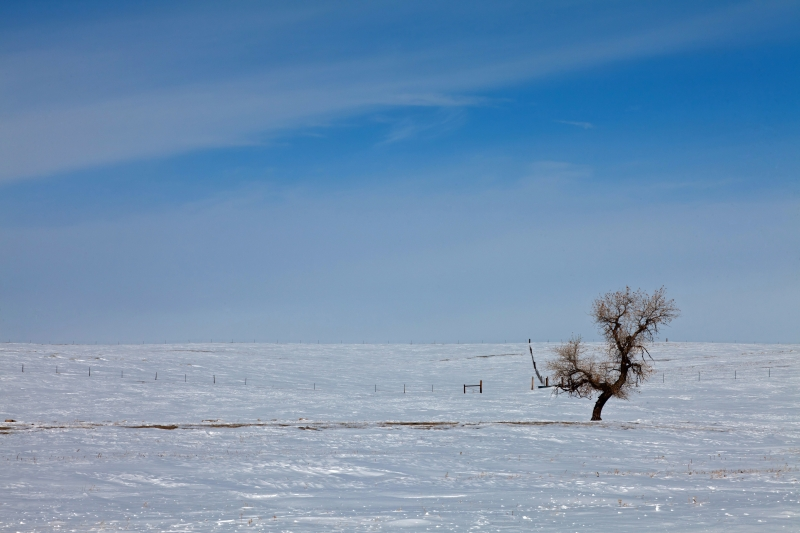 Lone Tree On The Plains