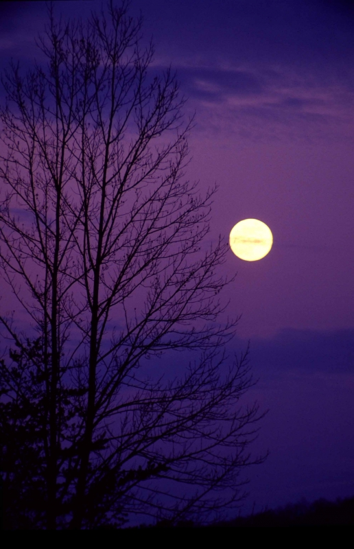 Moon And Tree Silhoutte