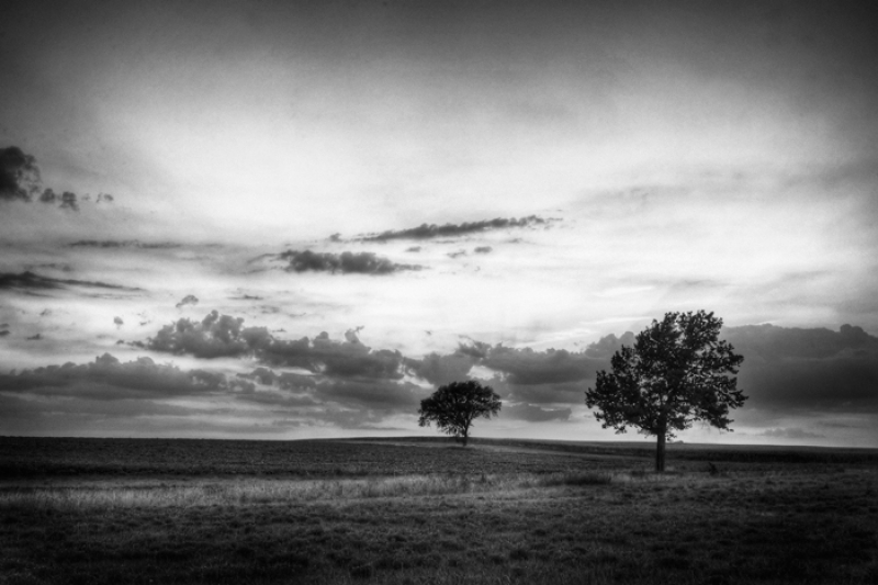 Two Trees – Montgomery County