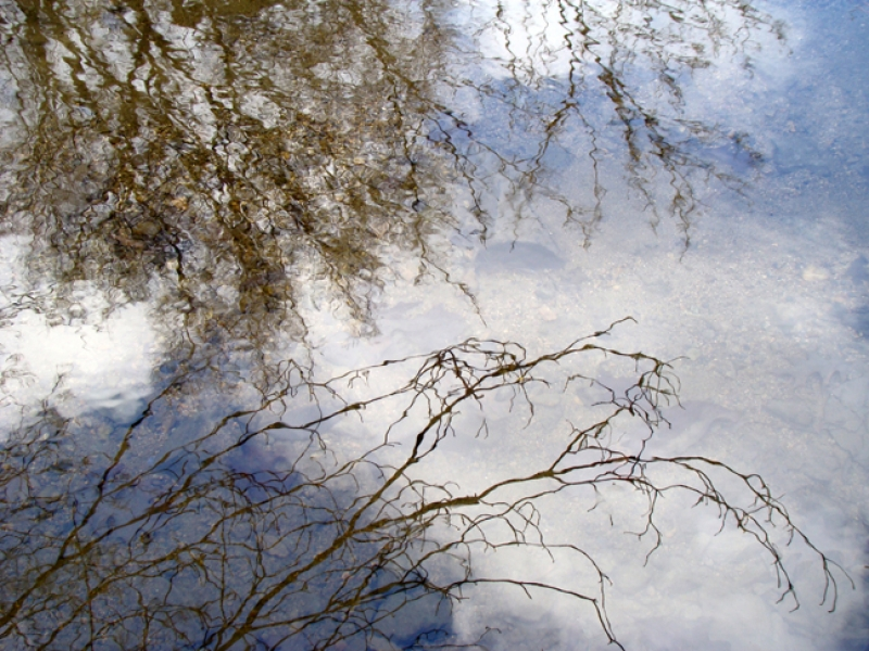 Dogwood Reflection