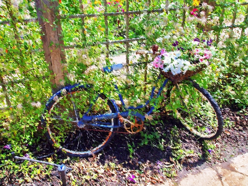 Bicycle And Blooms