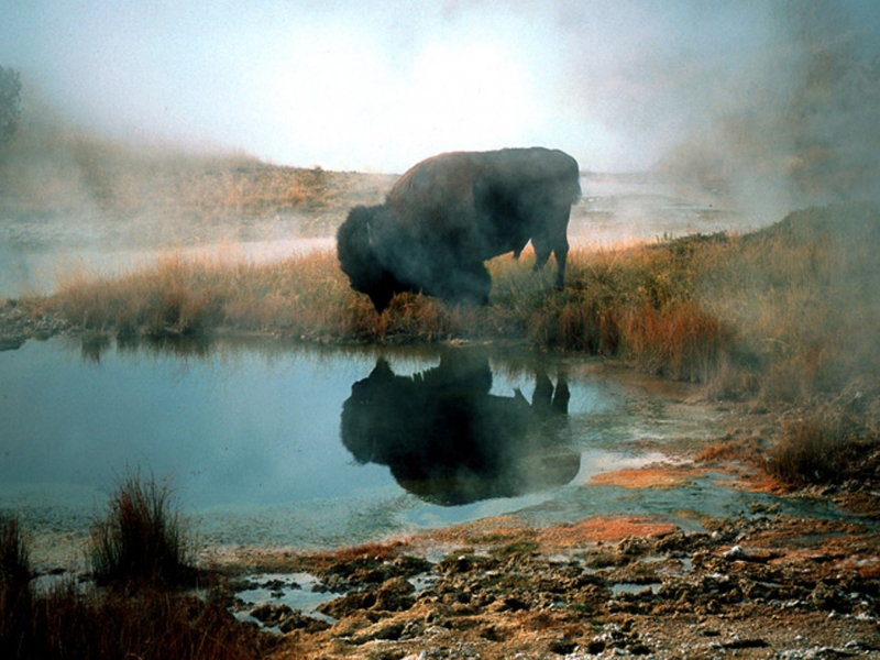 Early Morning At Lake Yellowstone Thermal Area