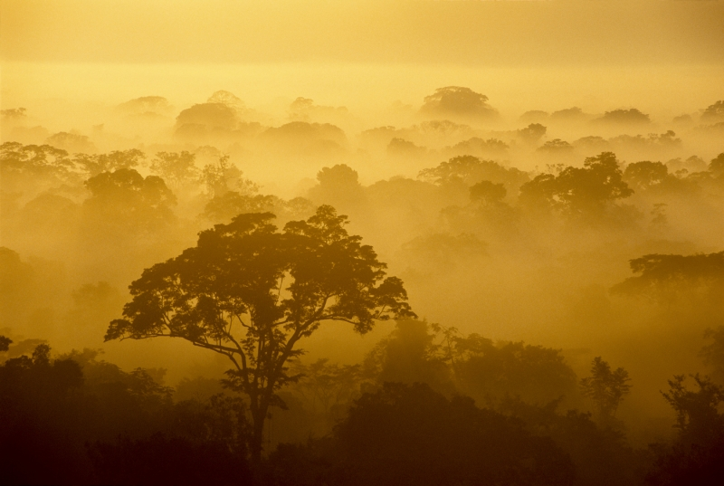 Sunrise At Tambopata National Park, Peru