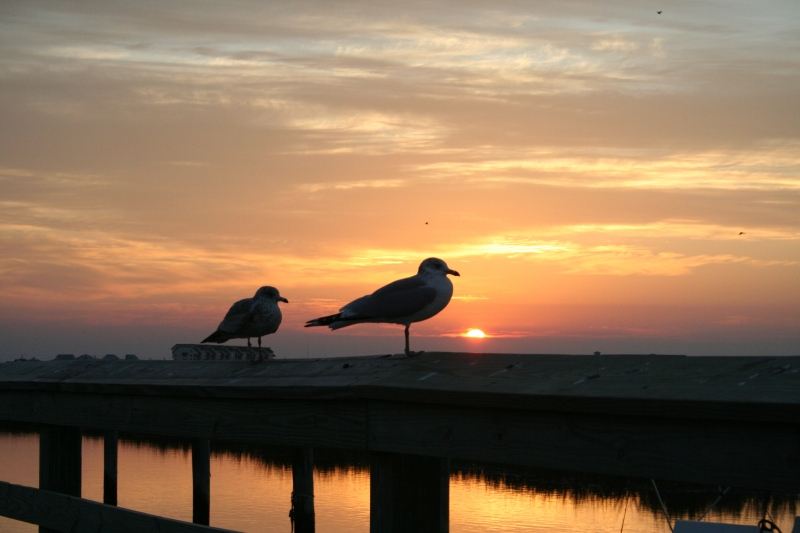 Gulls Enjoying Sunrise