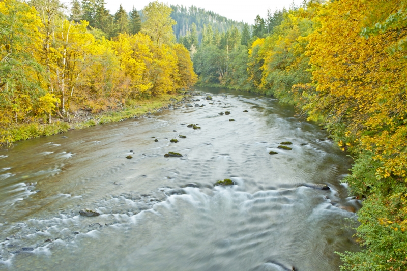 Sol Duc River Fall Colors