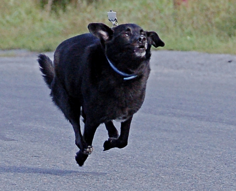 Dog Running Photo By: Chris Oden