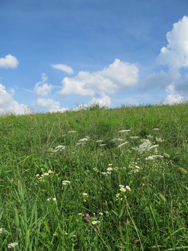 Wildflowers On A Hill