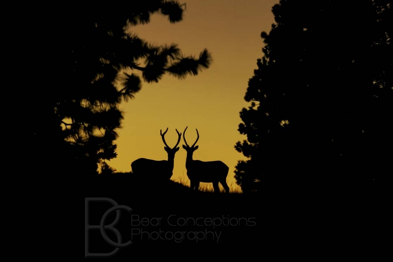 Antlers At Sunset