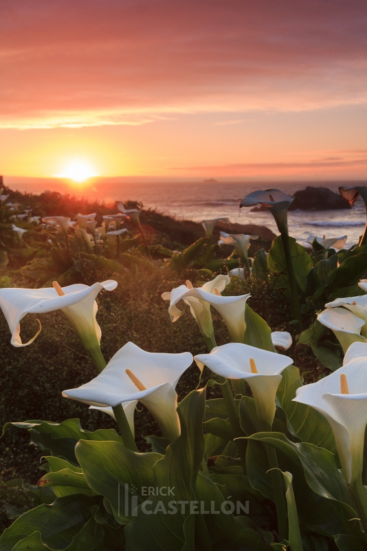 Warm Glow At The Cliff House