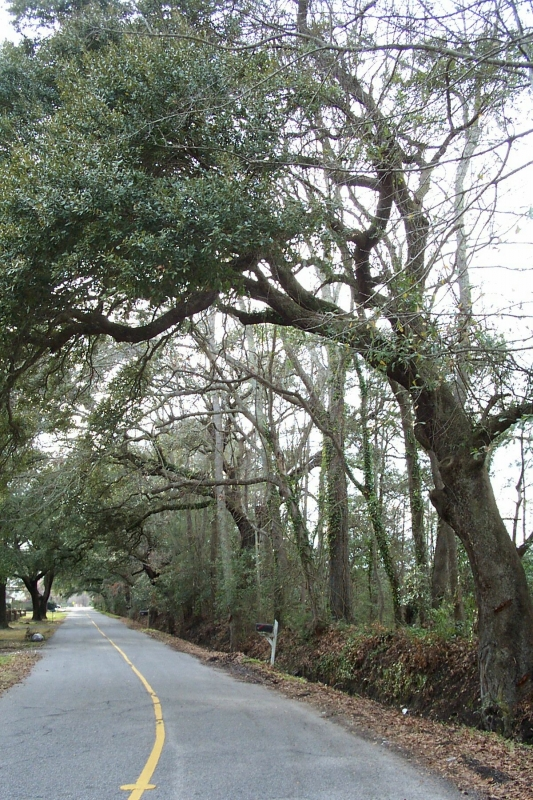 James Island Roadside