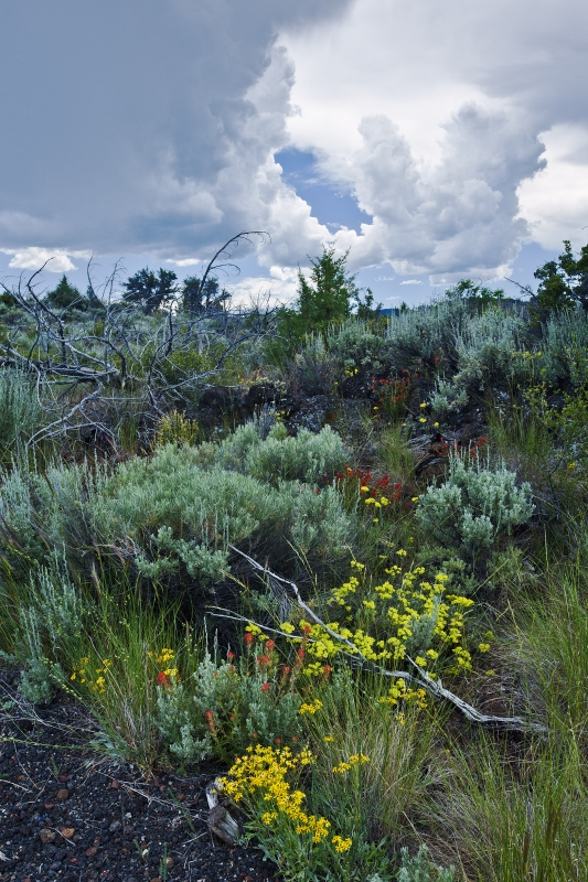 Lava Beds Wild Flowers