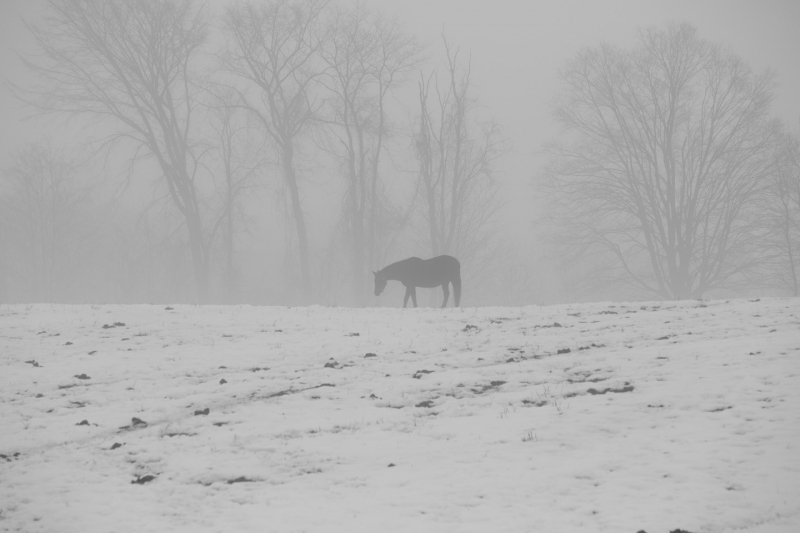 Horse In Fog And Snow