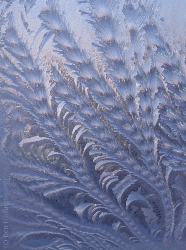 Vines In Window Frost