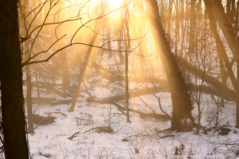 Winter Fog In A Wooded Hollow At Sunset
