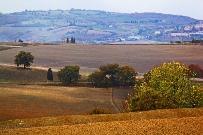 Multicolored Hills Of Val Di Orcia