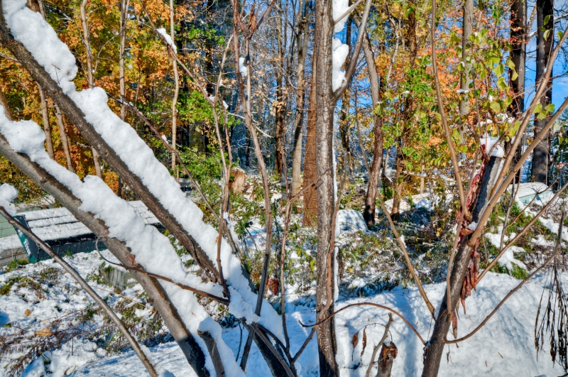 Trees, Leaves, Boats, Snow, Fall, Hdr