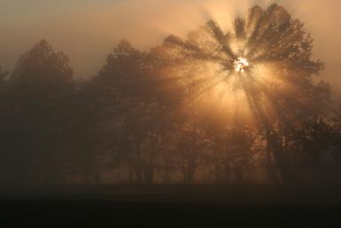 Early Morning Rays– Spark's Lane