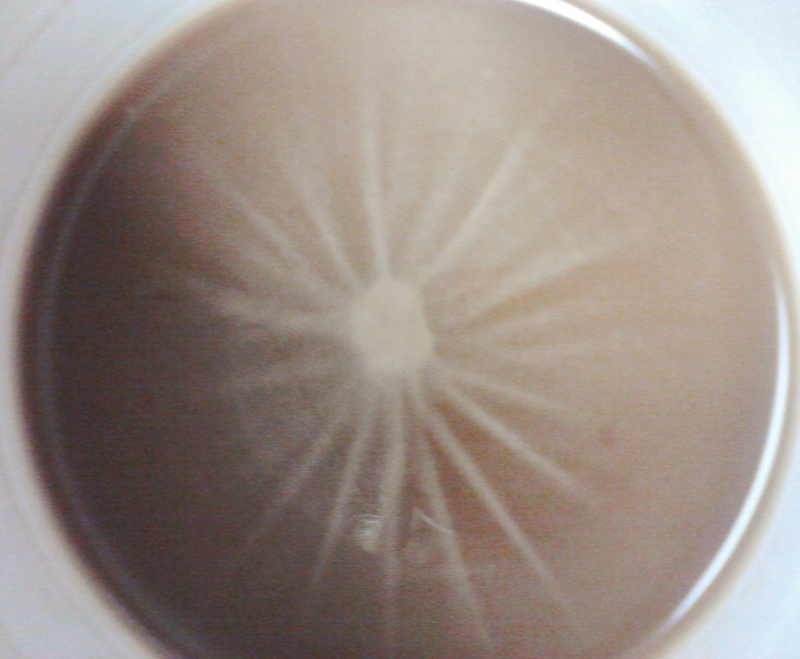 Cream On Coffee